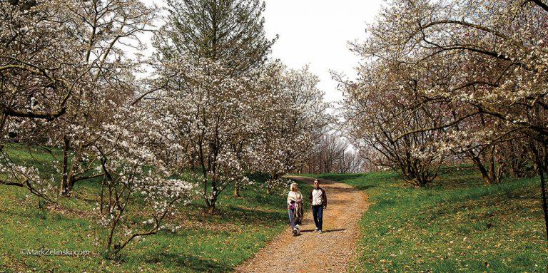 Arboretum-magnolias-creditmarkzelinski