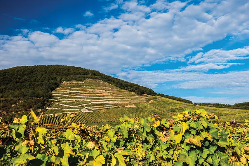 Öreg Király vineyard, Mád, Tokaji